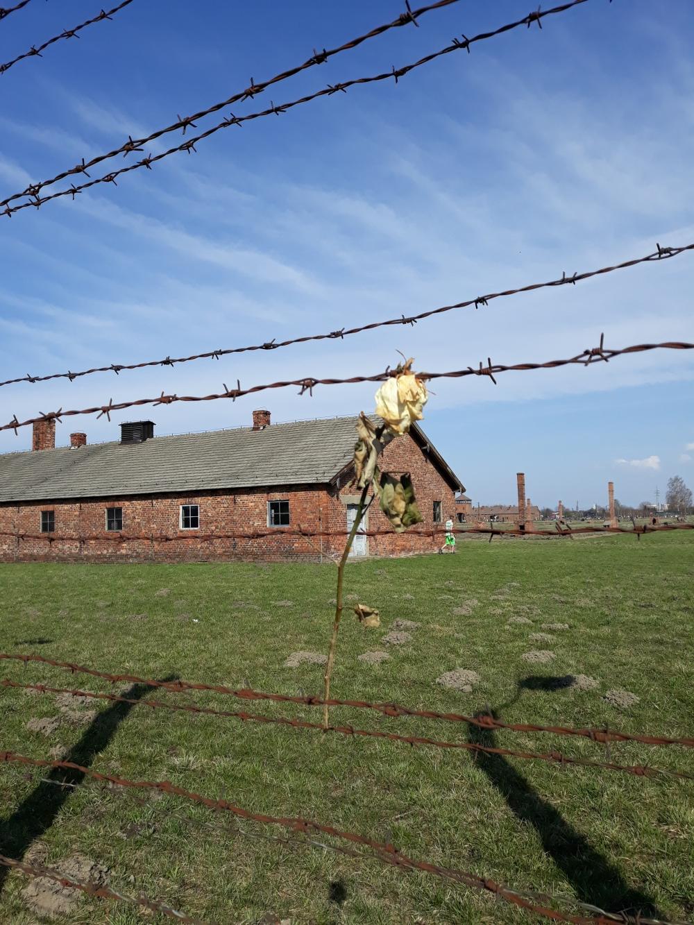 Campi di concentramento Birkenau